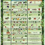 Garden Companion Planting Poster