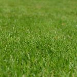Lawn Care and Epsom Salts