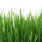 Warm and Cool Weather Grasses