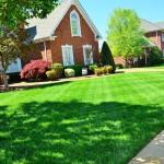 Organic Lawn Care Basics