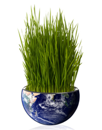 Grass Growing on Earth